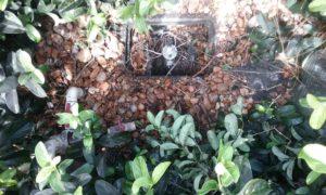 Lawn Sprinkler Repair Odessa